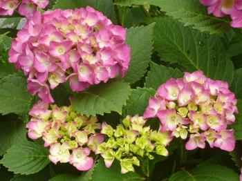 バラの公園2012年初夏 010.JPG