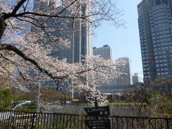 新宿中央公園の桜2012年 025.JPG