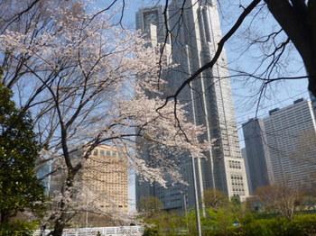 新宿中央公園の桜2012年 032.JPG