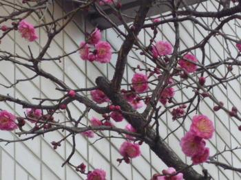 春のおとづれ 005.JPG