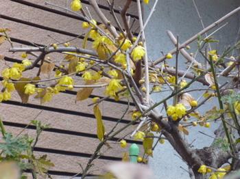 春のおとづれ 026.JPG