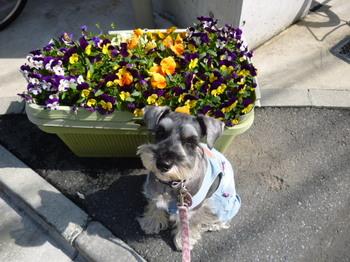 春の花2012年4月 016.JPG