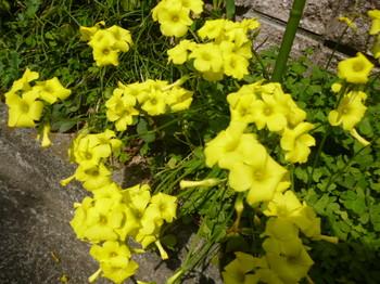 春の花2012年4月 022.JPG