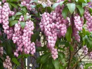 春の花2012年4月 023.JPG