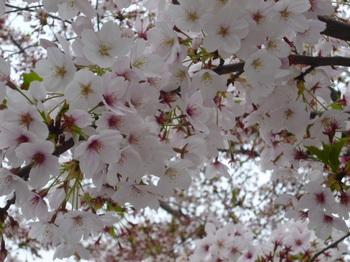 花めぐりメグの散歩 013.JPG