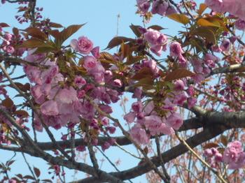 花めぐりメグの散歩 028.JPG