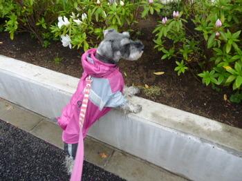花めぐりメグの散歩(3) 027.JPG