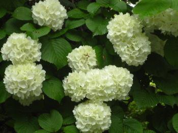 2012年昭和記念公園と花めぐり(3) 014.JPG