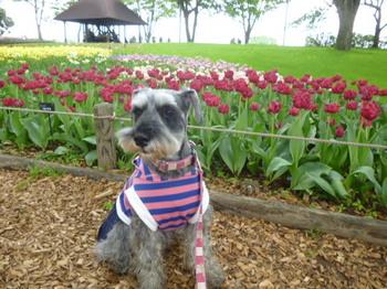 2012年昭和記念公園と花めぐり(3) 031.JPG