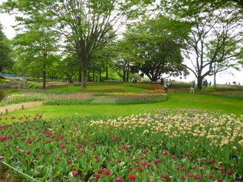 2012年昭和記念公園と花めぐり(3) 036.JPG