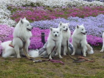 2012年昭和記念公園と花めぐり(3) 047.JPG