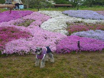 2012年昭和記念公園と花めぐり(3) 063.JPG