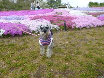 2012年昭和記念公園と花めぐり(3) 068.JPG