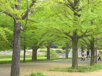 2012年昭和記念公園と花めぐり(3) 075.JPG