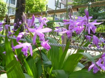 2012年昭和記念公園と花めぐり(3) 092.JPG