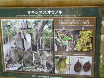 2012年石垣島旅行 150.JPG