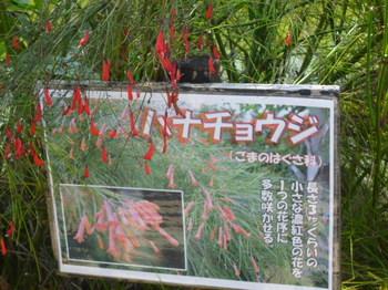 2012年石垣島旅行 177.JPG