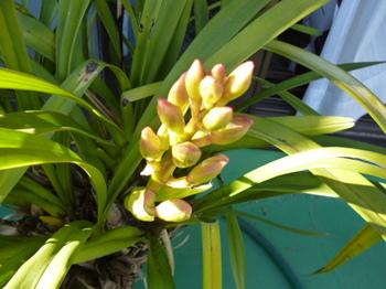 2013春ベランダの花 002.JPG